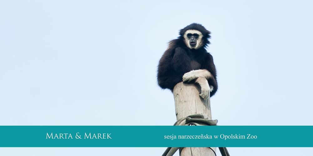 sesja narzeczńska zoo opole (1)